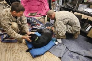 Dakota, improvised explosive device detector dog, survives firefight