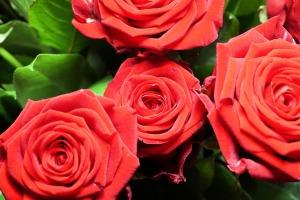 roses-1041156_960_720